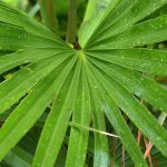 """""""Leaf Venation"""" is a pattern of Leaf, its Structure, and Types."""